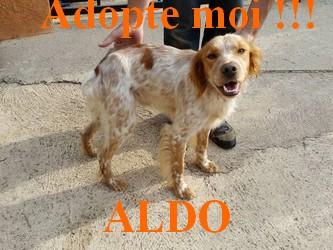 aldo10
