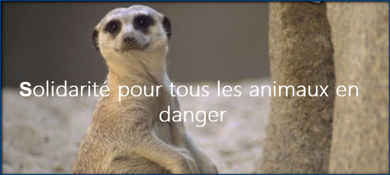 Solidarité pour les animaux en danger