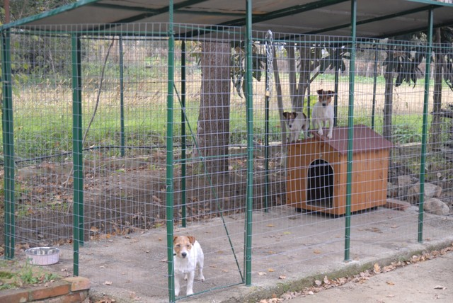 Recinzione cani giardino confortevole soggiorno nella casa - Recinti da giardino ...