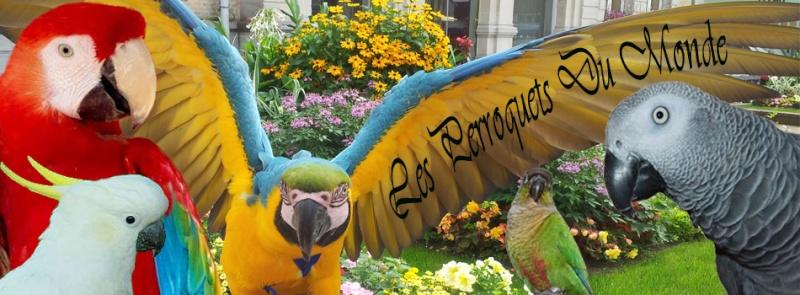 Les perroquets du monde
