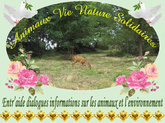 Animaux Nature Vie Solidaires