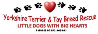 The Yorkshire Terrier & Toy Breed Rescue