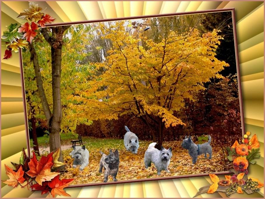 Cairn Terrier de A à Z