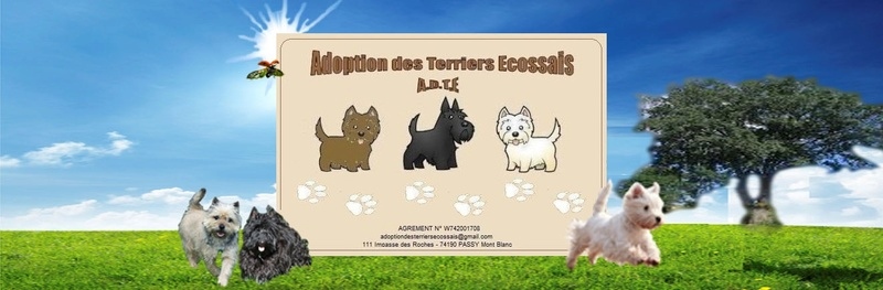 Adoption des Terriers Ecossais