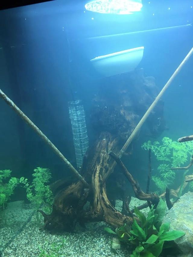 la vie de mon aquarium en image rio 450 l. Black Bedroom Furniture Sets. Home Design Ideas