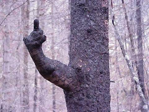 http://i97.servimg.com/u/f97/17/27/77/35/arbre-10.jpg