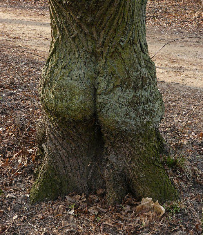 http://i97.servimg.com/u/f97/17/27/77/35/arbre10.jpg
