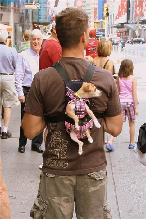 http://i97.servimg.com/u/f97/17/27/77/35/chien-10.jpg