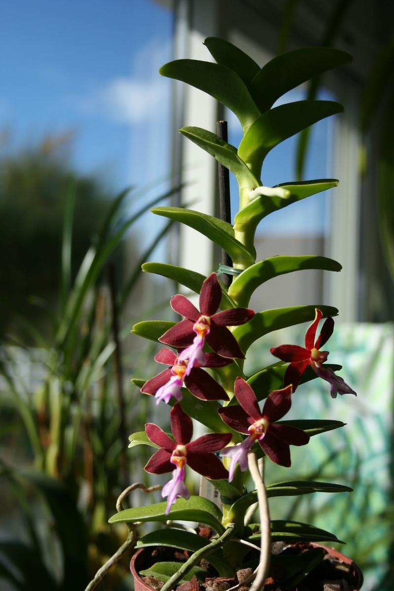 La journ e des plantes a chantilly - Journee des plantes chantilly ...