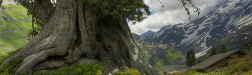 Sky Oak