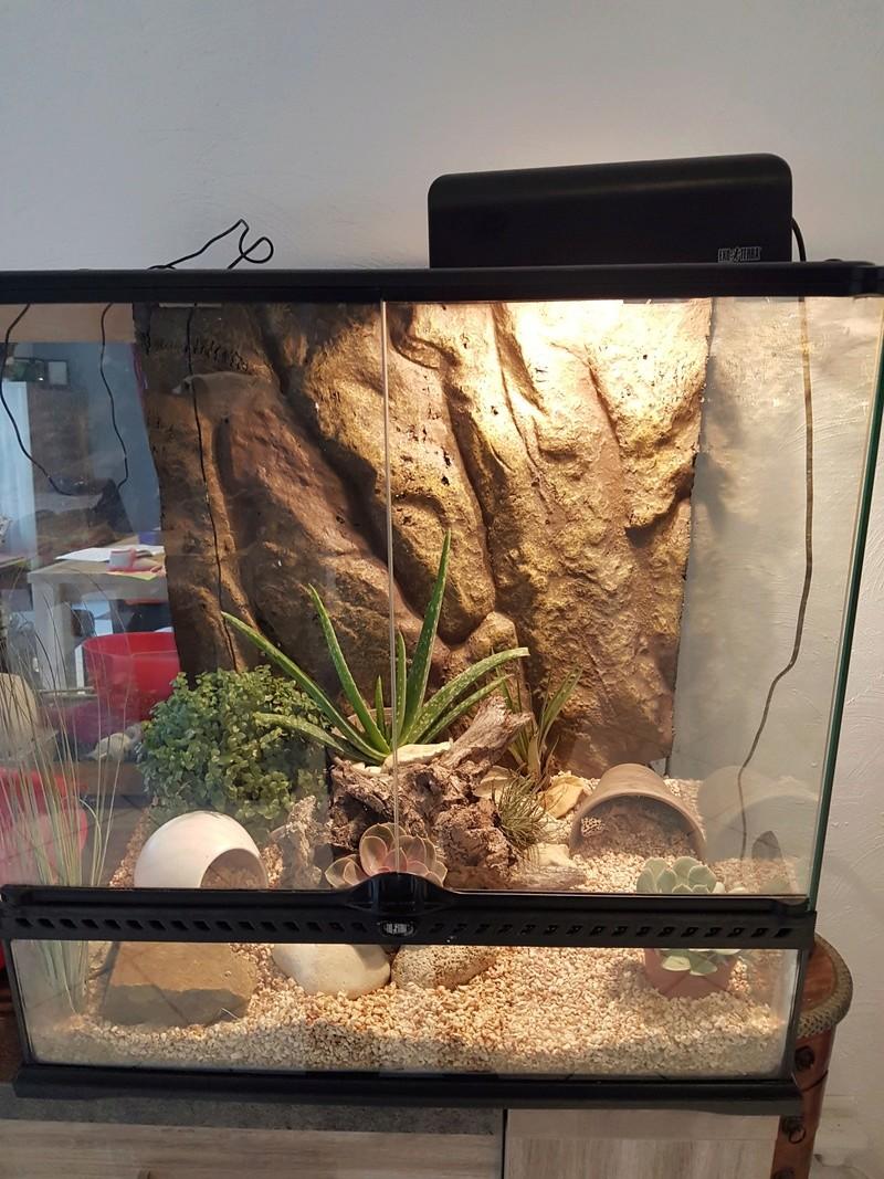 decoration terrarium gecko leopard. Black Bedroom Furniture Sets. Home Design Ideas