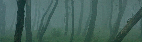 Dark Mist Woods