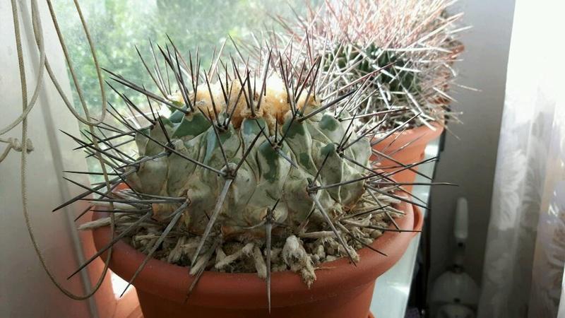 kaktus10.jpg