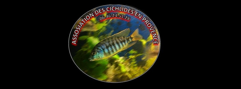 Association des Cichlidés en Provence