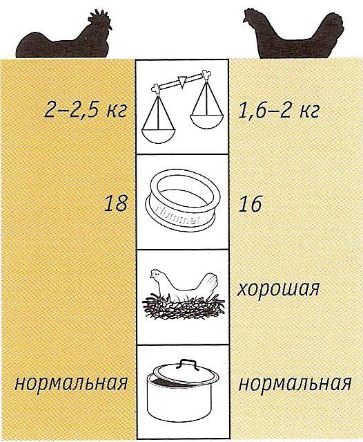 arauka12.jpg