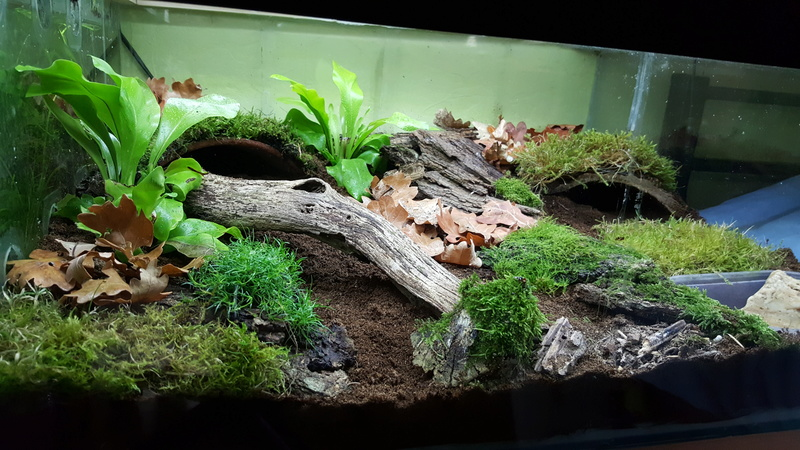 un terrarium pour des ambystoma mavortium page 2. Black Bedroom Furniture Sets. Home Design Ideas