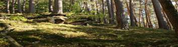 Coalwood Forest