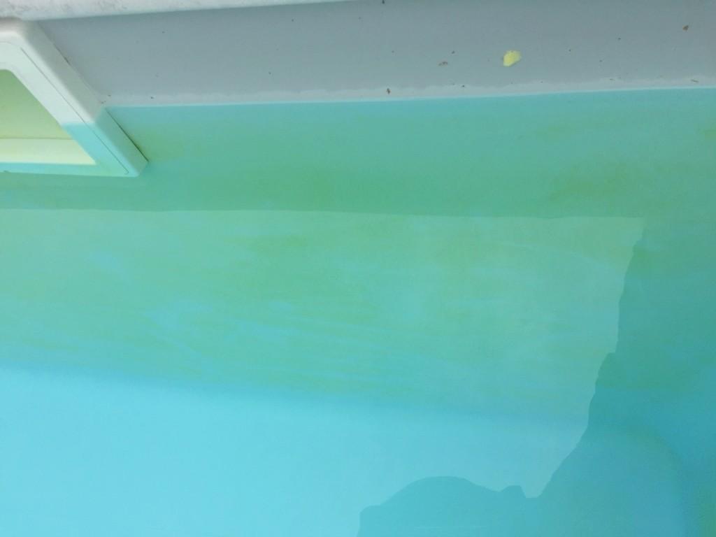 Algues vertes sur les parois algues moutarde 15 for Algue dans piscine
