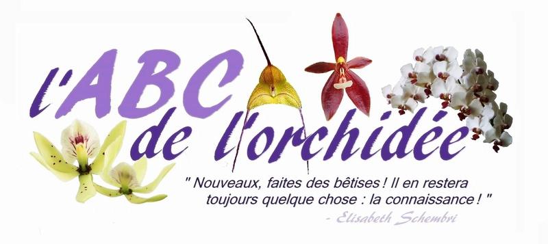 Forum l'ABC de l'orchidée