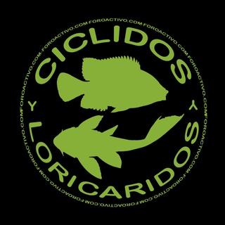 Ciclidosyloricaridos.foroactivo.com