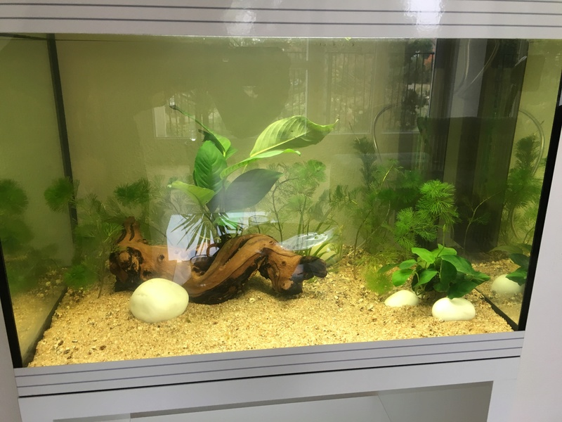 Decoration Aquarium Sans Appareillage